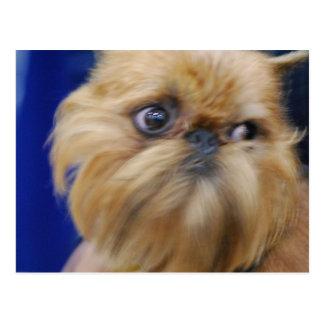 Postal del perro de Bruselas Griffon