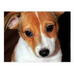Postal del perro de perrito de Jack Russell Terrie