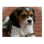 Postal del perro de perrito del beagle