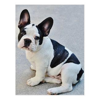 Postal del perro de perrito del dogo francés