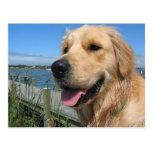 Postal del perro de perrito del golden retriever