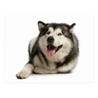 Postal del perro de perrito del Malamute de Alaska