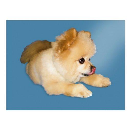 Postal del perro de Pomeranian