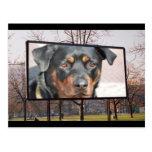 Postal del perro de Rottweiler