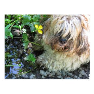 Postal del perro del agua dulce