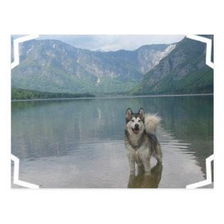 Postal del perro del Malamute