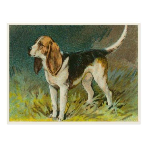 Postal del perro del vintage con el beagle lindo