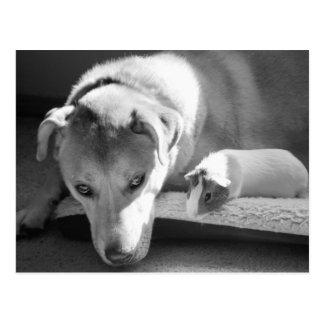 Postal del perro y del conejillo de Indias