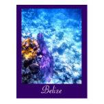 Postal del personalizado de la fan de mar de Belic