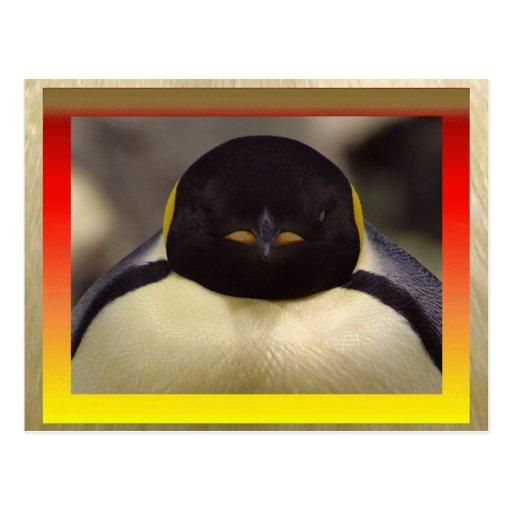 Postal del pingüino
