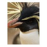 Postal del pingüino de Rockhopper