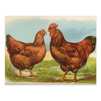 Postal del pollo del rojo de Rhode Island del