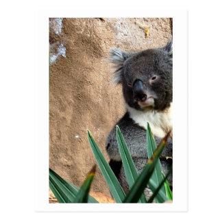 Postal del primer de la koala