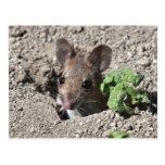 Postal del ratón de madera