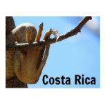 Postal del recuerdo de la iguana de Costa Rica
