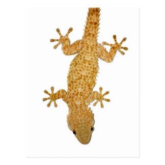 Postal del reptil del lagarto