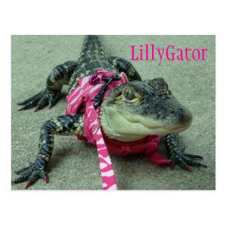 Postal del rescate del cocodrilo de LillyGator