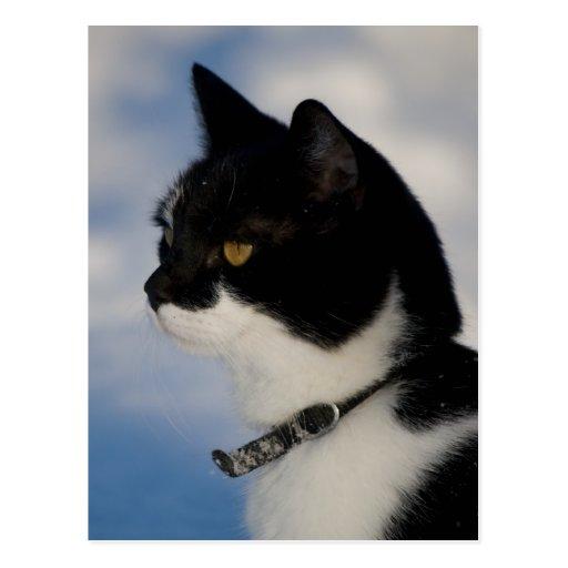 Postal del retrato CC0104 del gato