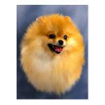 Postal del retrato de Pomeranian