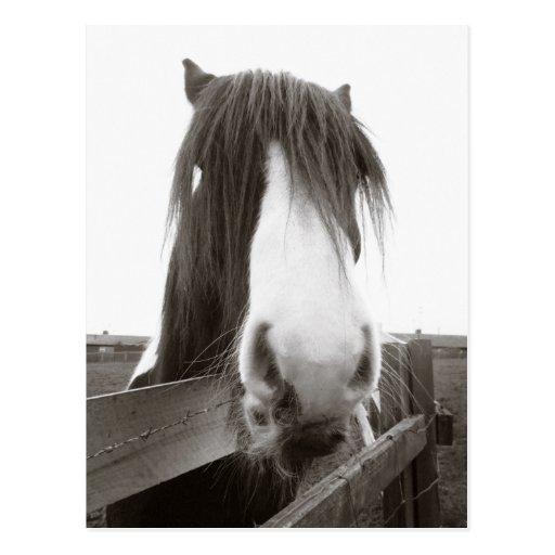 Postal del retrato del caballo de la sepia