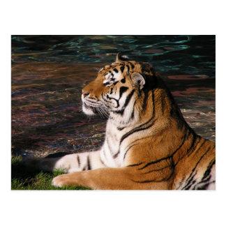 Postal del retrato del tigre