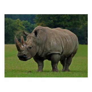 Postal del rinoceronte