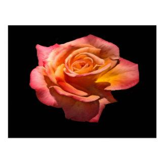Postal del rosa de té de Granada