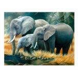 Postal del safari de la familia del elefante