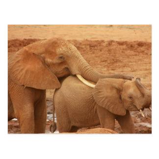 Postal del safari del elefante