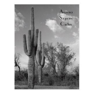 Postal del Saguaro de Arizona
