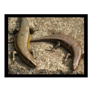 Postal del Salamander