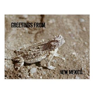 Postal del sapo de cuernos de New México