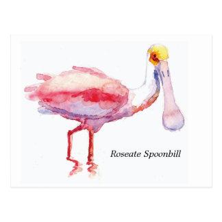 Postal del Spoonbill rosado
