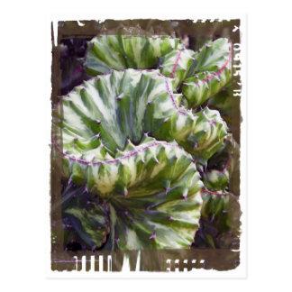 Postal del Succulent de Curlicue