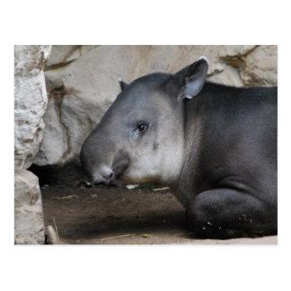 Postal del Tapir
