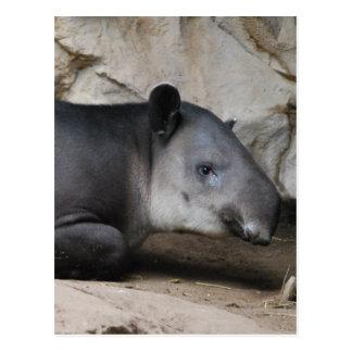 Postal del Tapir de Baird