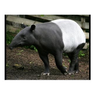 Postal del Tapir malayo
