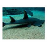 Postal del tiburón de arena
