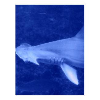 Postal del tiburón de Hammerhead
