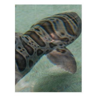 Postal del tiburón de tigre