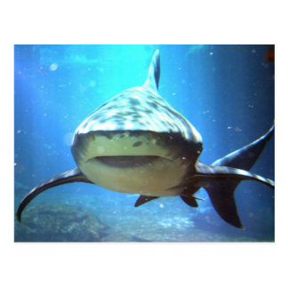 Postal del tiburón