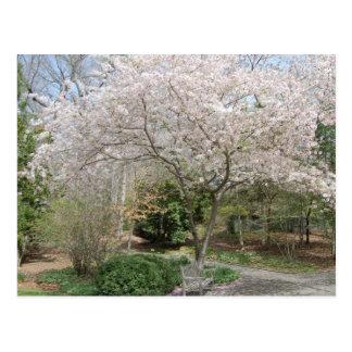 Postal del tiempo de primavera