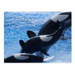 Postal del trío de la orca