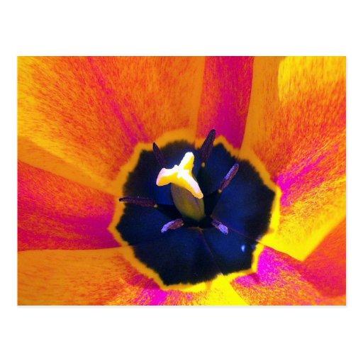 Postal del tulipán 3 de la opinión de un insecto