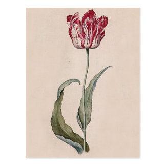 Postal del tulipán de Judith Leyster