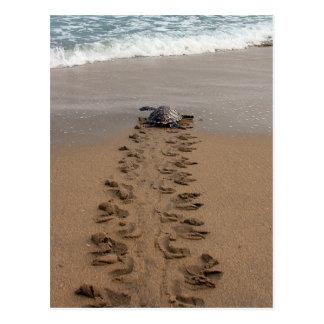 Postal del viaje de la tortuga de Hawksbill