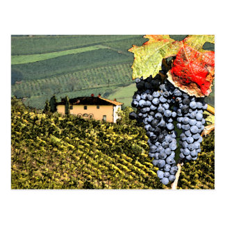 Postal del viñedo de Toscana