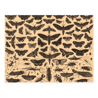 Postal del vintage de los ejemplos del insecto
