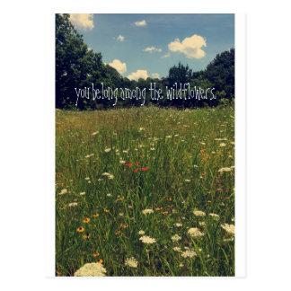 Postal del Wildflower