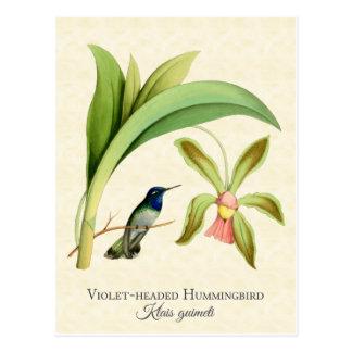 Postal dirigida violeta del arte del colibrí